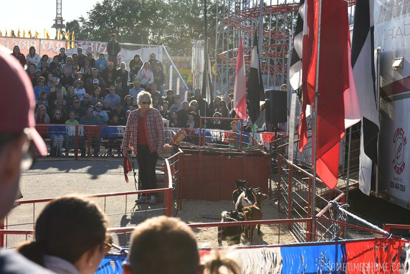 North Carolina State Fair photos on Sometimes Home travel blog by photographer Mikkel Paige. The fair has pig races and other livestock!