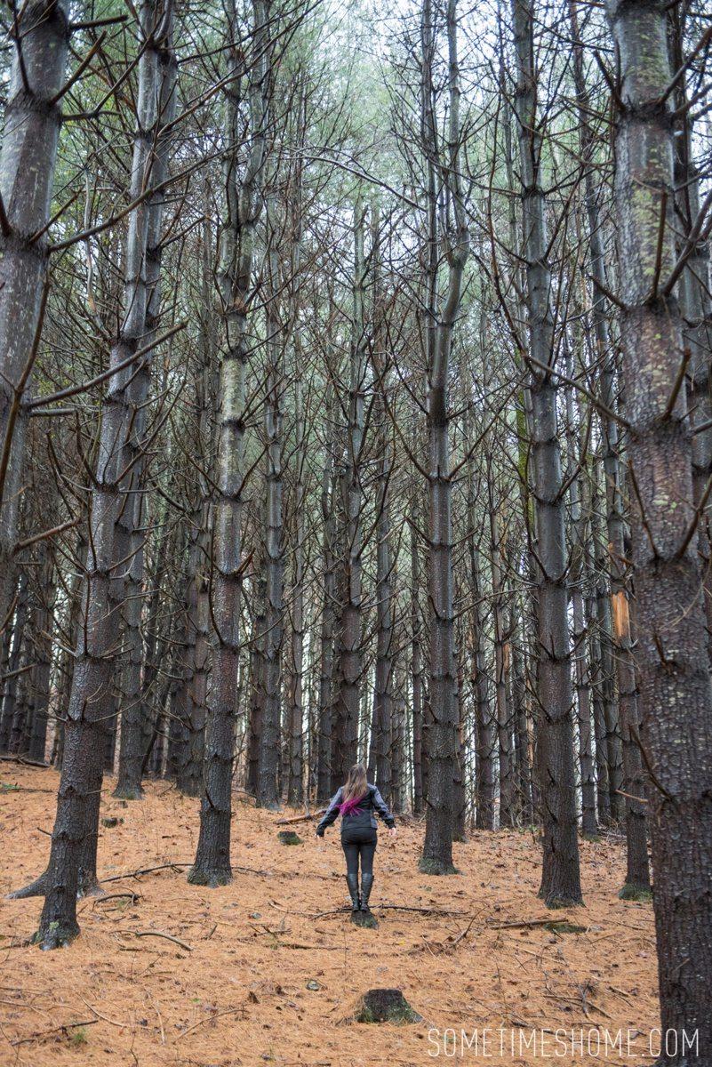 mikkelpaige-boone_nc_fall_foliage-linville_0010