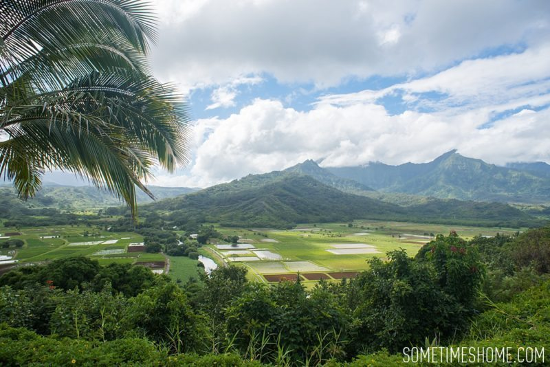 What to do and see in the north end of Kauai, Hawaii by Sometimes Home travel blog. Image by Mikkel Paige of an aerial view of a taro farm.