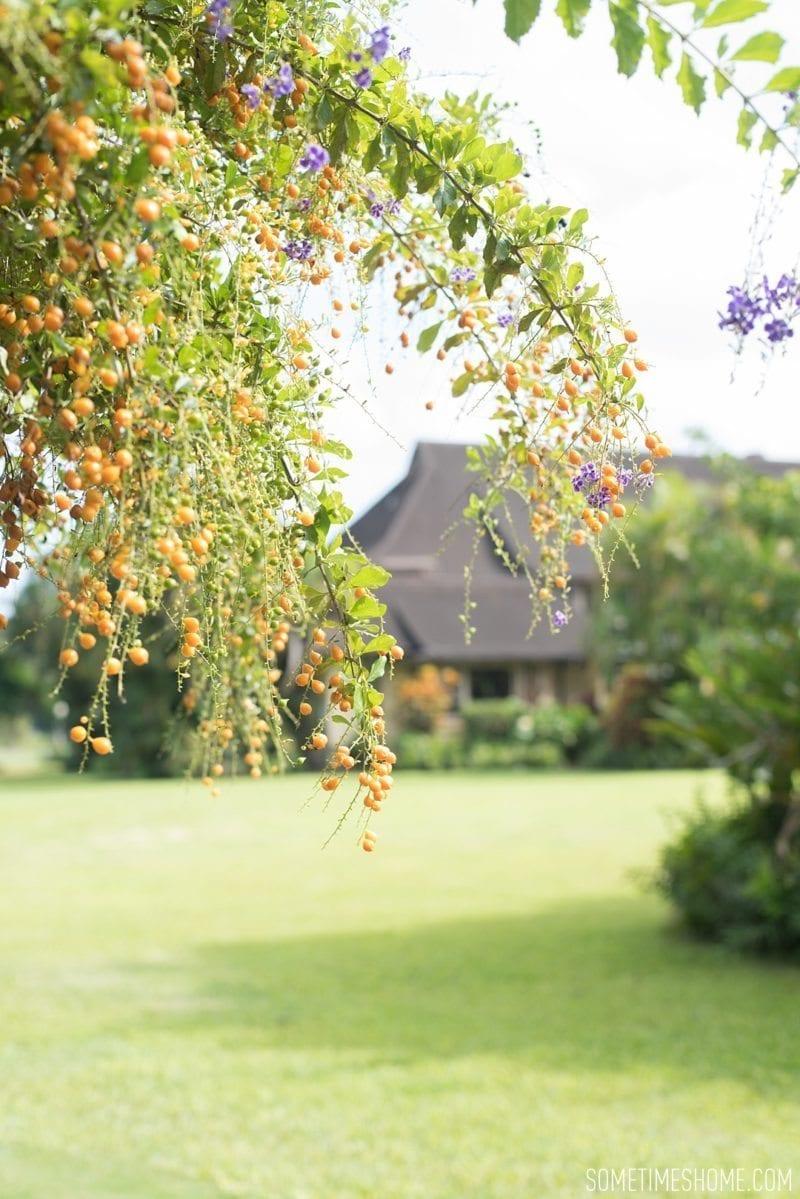 Kilohana Estate photos in Kauai by Sometimes Home travel blog, and professional photographer Mikkel Paige.