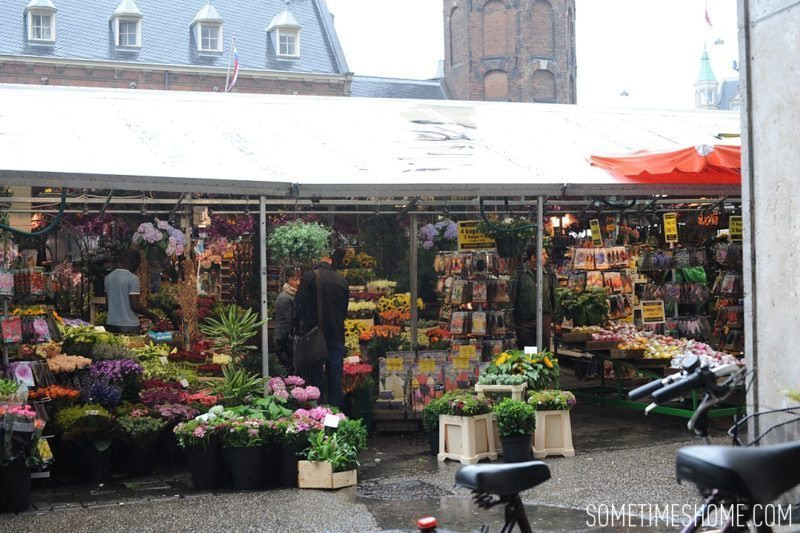 Things to do in Amsterdam besides smoking pot by travel blog Sometimes Home. Walk around the markets to see the flower options.