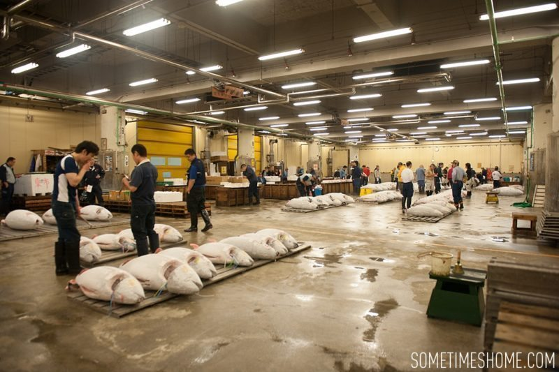 Early morning experience and photos at Tsukiji Fish Market in Tokyo, Japan by Sometimes Home Travel Blog. Overview of the frozen tuna ready for auction.