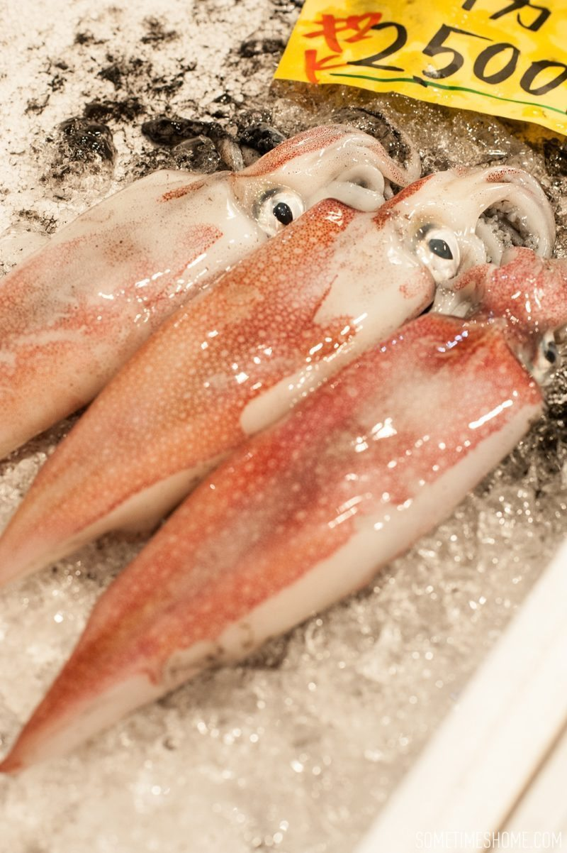 Experience and photos at Tsukiji Fish Market in Tokyo, Japan by Sometimes Home Travel Blog. Picture of the squid for sale.