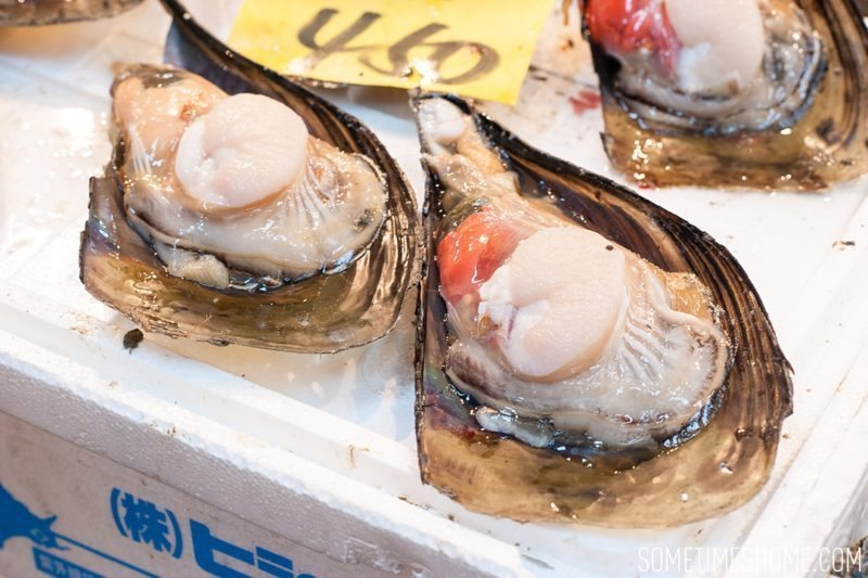 Experience and photos at Tsukiji Fish Market in Tokyo, Japan by Sometimes Home Travel Blog. Picture of giant clam for sale.
