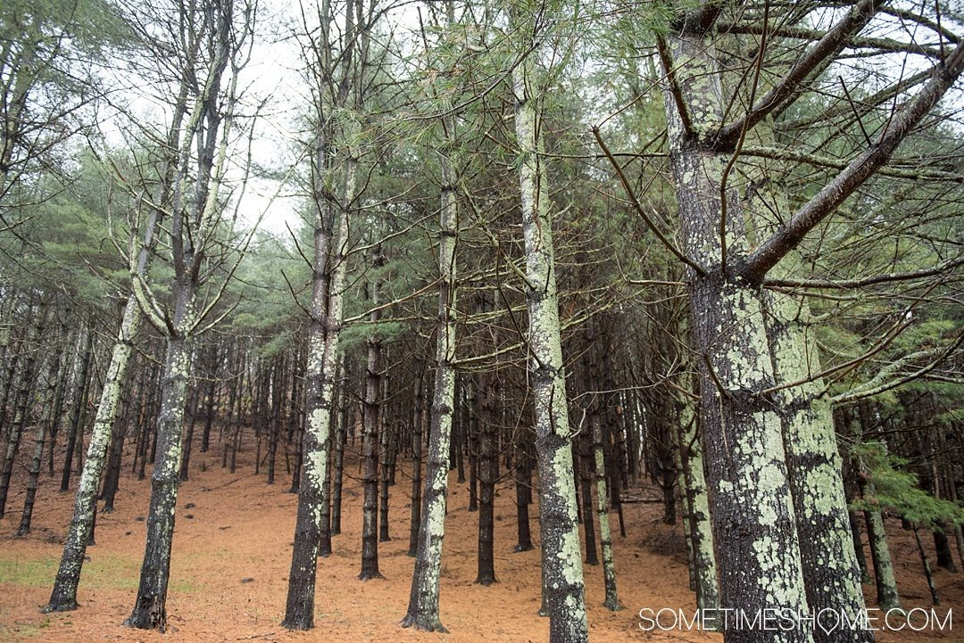 What to do on a rainy day in Boone, NC. Photos and activities on Sometimes Home travel blog. Picture of a misty forest.