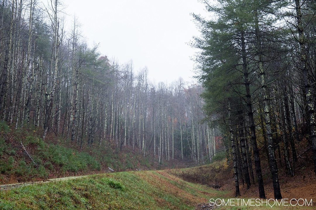 What to do on a rainy day in Boone, NC. Photos and activities on Sometimes Home travel blog. Picture of a misty pine forest.