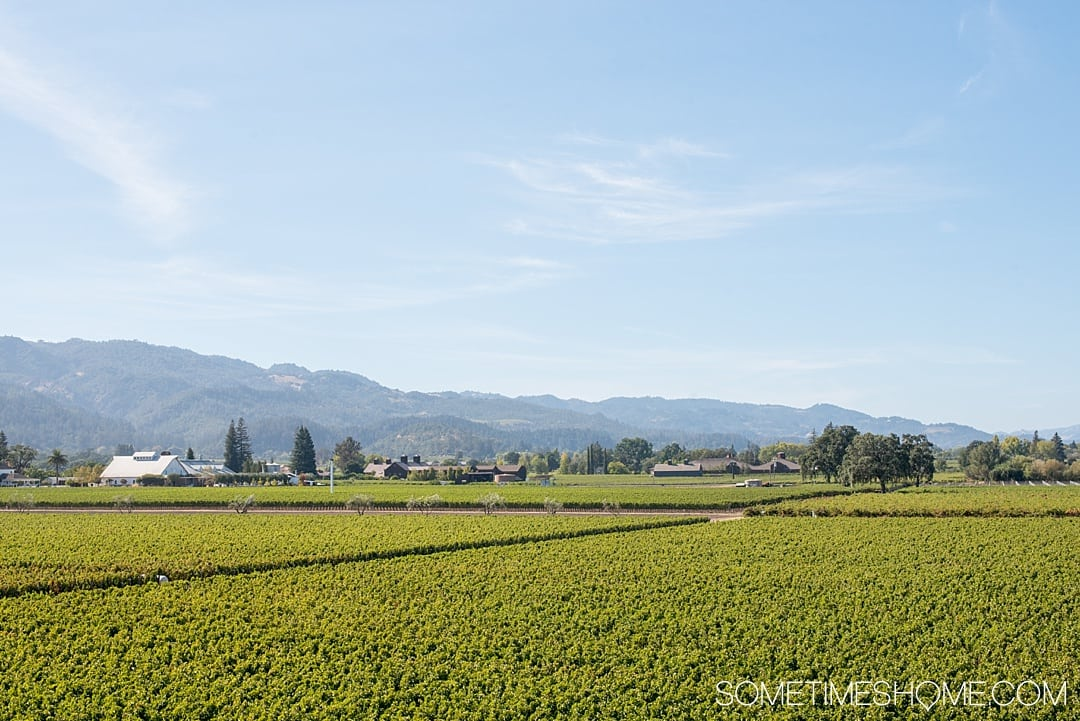 Helpful information about Napa Valley. Things to do in this beautiful wine region of California for a romantic vacation, whether you're on a budget or have a fuller wallet. From wineries and vineyards, to tasting rooms and restaurants we have information you want to know! Click through to be informed! #NapaValley #Napa #NapaCalifornia #Wineries #NapaValleyCA #informationaboutNapa