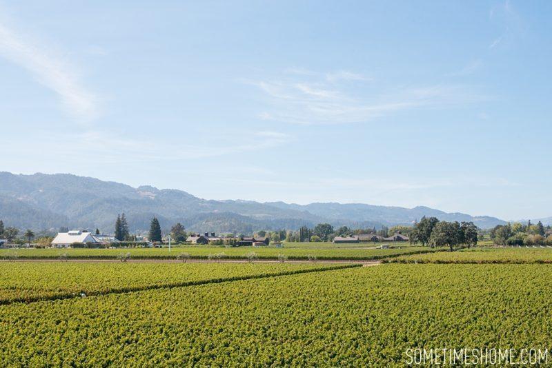 sometimeshome-napa-opus-one-winery-photos_0013