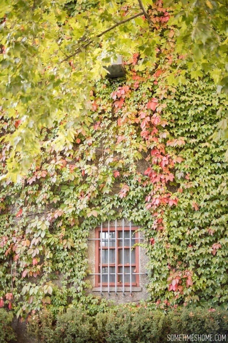 sometimeshome-napa-opus-one-winery-photos_0023