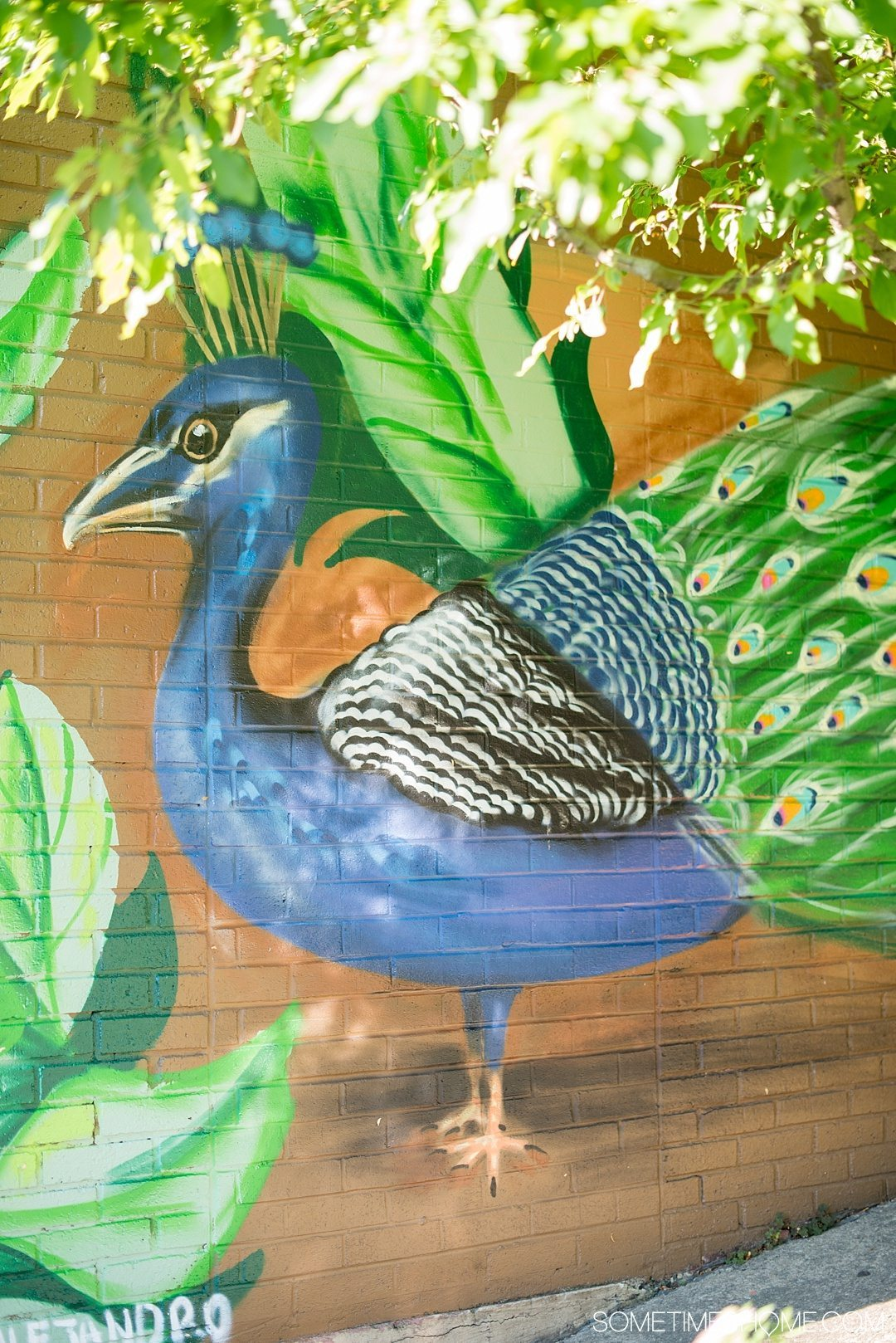 Why a Trip to Buffalo Had Me in Disbelief on Sometimes Home travel blog. Photo of a peacock mural in the city's downtown area of Allentown.