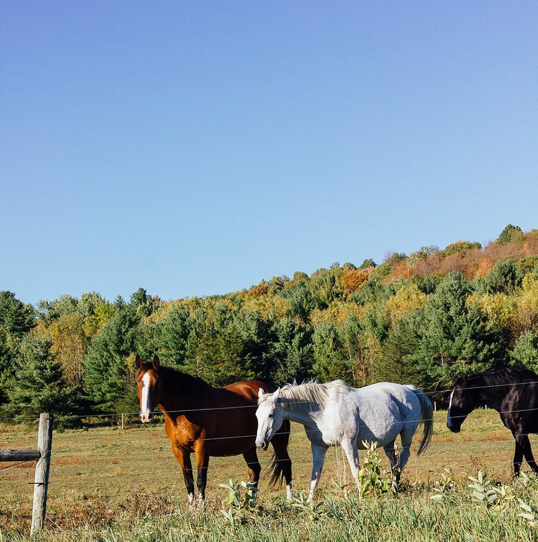 Fantastic Fall Destination Ideas Around the World on Sometimes Home travel blog. Picture of Vermont from Paroma of Year of the Monkey.