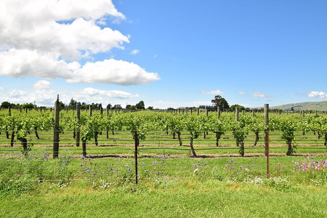 Fantastic Fall Destination Ideas Around the World on Sometimes Home travel blog. Picture of South Island, New Zealand vineyard by Alexandra of Positive Impact Journey.