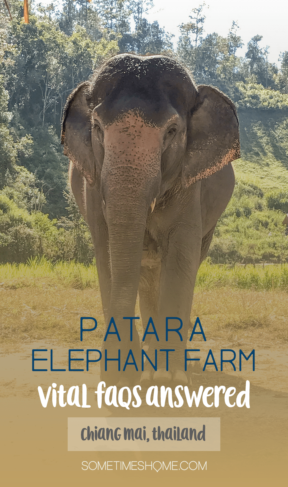 Vital FAQs Answered About Patara Elephant Farm in Chiang Mai. Information by Sometimes Home travel blog. Participating in Elephant Owner for a Day.