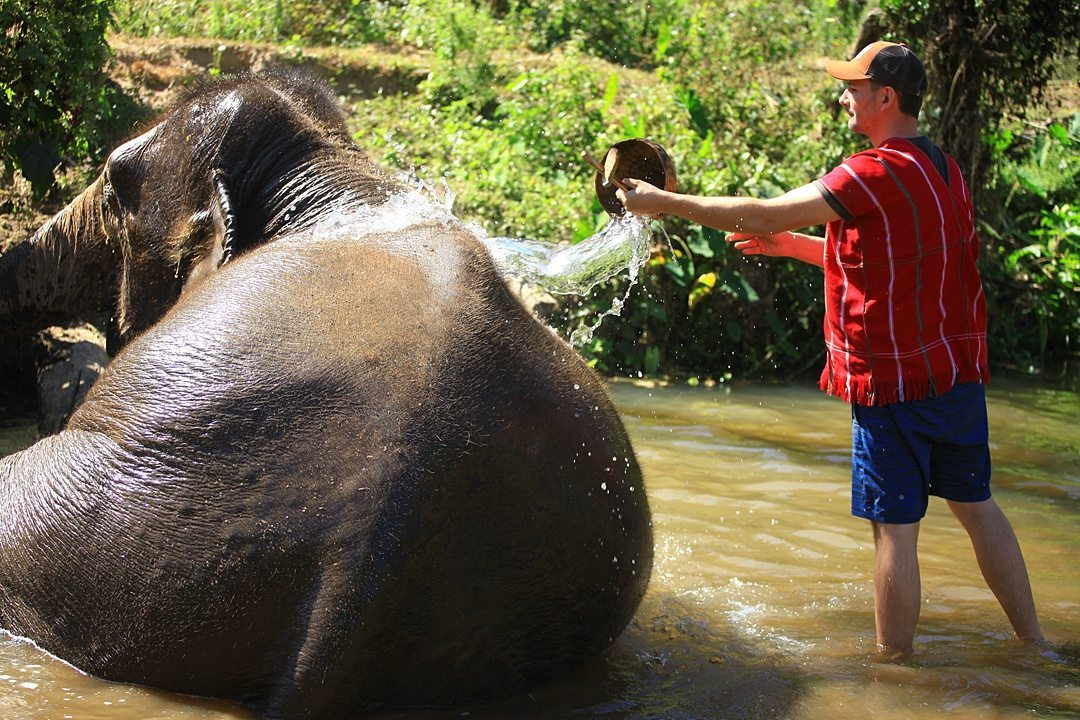 Vital FAQs Answered About Patara Elephant Farm in Chiang Mai. Information by Sometimes Home travel blog. A photo participating in Elephant Owner for a Day including bathing the animals.