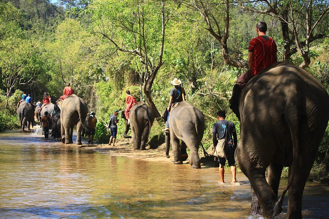 Vital FAQs Answered About Patara Elephant Farm in Chiang Mai. Information by Sometimes Home travel blog. A photo participating in Elephant Owner for a Day including riding the animals through the river.
