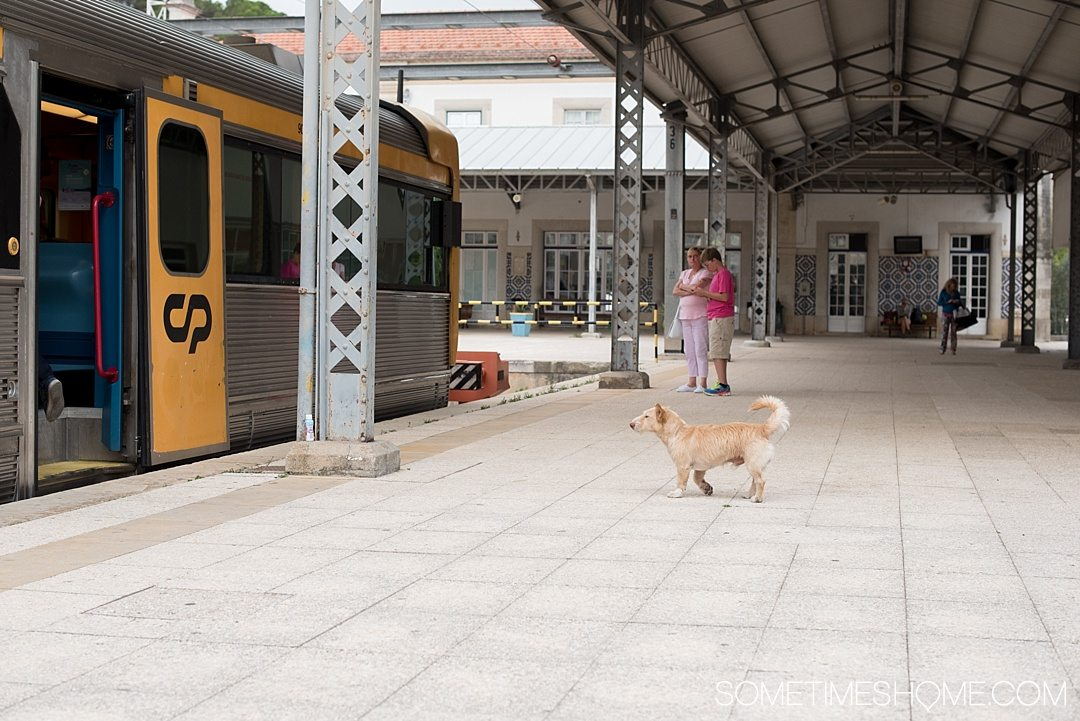 Day trip to Tomar, Portugal from Lisbon. Photos, tips and advice on Sometimes Home travel blog. Picture of the train station.