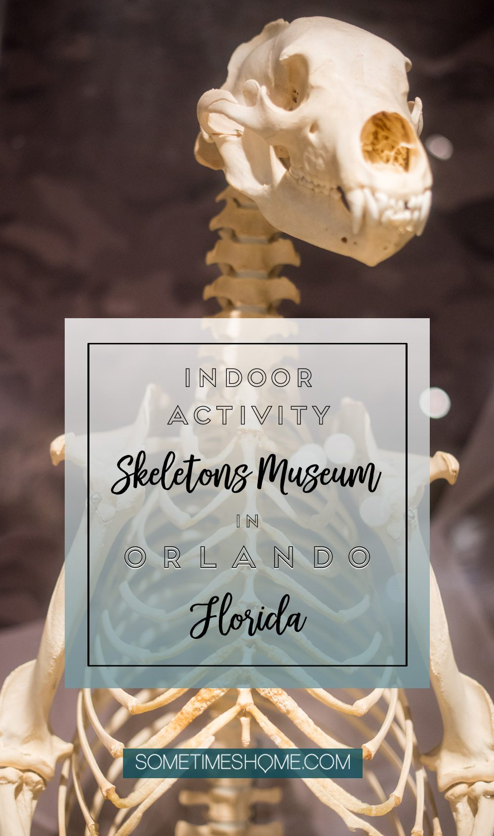 Orlando indoor activities for adults: Skeletons Museum of Osteology. It's a great thing to do for adults or kids, indoors on International Drive at the new attraction area in Florida: I-Drive 360 near the Orlando Eye Ferris Wheel. Click through for hours of operation and what to expect. #OrlandoFL #Skeletons #Bones