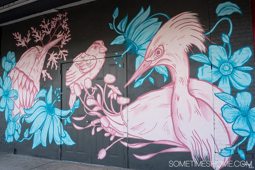 Photography of murals in the city of Tampa Bay, Florida. This is a free activity to partake in and is mostly located in the downtown neighborhood called The Heights. Embark on an adventure to take Instagram worthy pictures as we share where to find the best graffiti art of its kind, like this pink, black and blue bird mural! Click through to read which inspired us most and exactly where they're located. #TampaBay #TampaFlorida #StreetArt #Murals #Graffiti