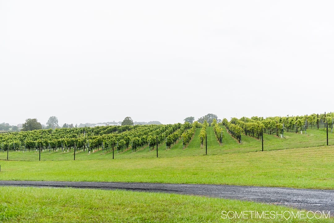 Things to do in Loudoun County, Virginia, including wineries, a hotel and spa and a beautiful picture-worthy downtown area in Leesburg. This is a trip incredibly close to Washington DC and may be the perfect getaway, close to home. Our photography will inspire you to travel there asap! Click through for details of where to eat, play and stay! #LoudounCounty #LeesburgVirginia #WashingtonDC #WeekendTrip #LansdowneResortandSpa #Lansdowne #VirginiaWineries #VirginiaWine #SometimesHome
