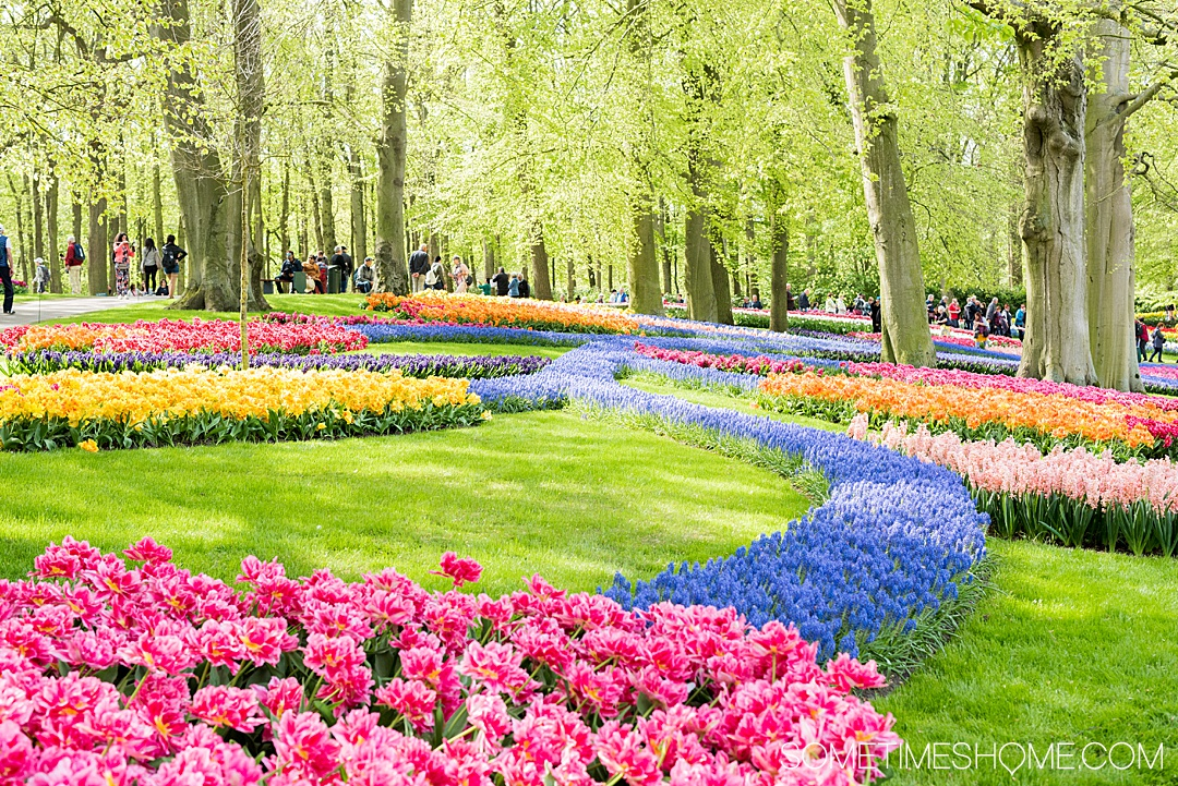 Amsterdam river cruise in The Netherlands and beautiful Belgium with tulips in bloom and a lot of charming European port cities to visit you wouldn't otherwise think of. We traveled with Emerald Waterways for 8 days of destinations and exploring in Europe day and night, with adventure to explore on the ships and in each city. #SometimesHome #SometimesHomeEurope #AmsterdamRiverCruise #EuropeanRiverCruise #AmsterdamTulips #Holland #KeukenhofGardens