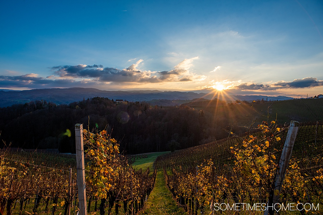 Wondering what things to do with two days in Maribor, Slovenia? From great food at one of the best restaurants in the nation, to wine and travel to vineyards, to ideal photography spots we have the best itinerary for a day in the historic city center and driving around the region. #Maribor #Slovenia #SometimesHome #SloveniaPhotography #heartroad