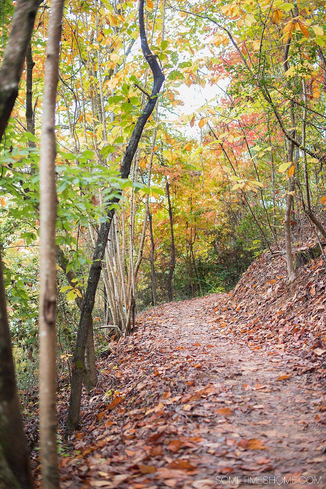 One of the best things to do in the North Carolina mountains is hike! And we have your guide to the best hiking near Morganton, NC in Burke County near the Blue Ridge Mountains. Fall colors were at their peak in the Appalachian Mountains range at the time we took this beautiful photography on Fonta Flora trail. #sometimeshome #besthikingnorthcarolina #autumncolors #peakfallleaves #blueridgemountains