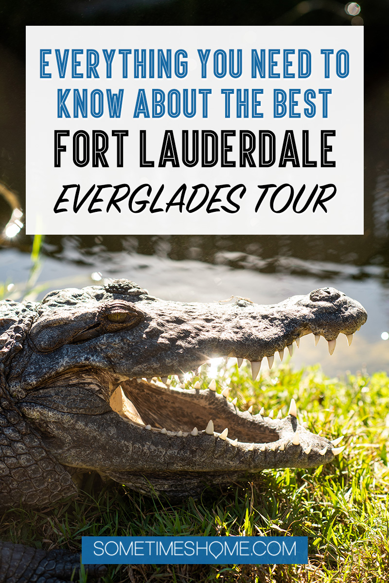 Fort Lauderdale Everglades tour of Everglades National Park in Florida, also easily accessible from Miami, with pictures of what to expect on an airboat ride in addition to alligators. #evergladesnationalpark