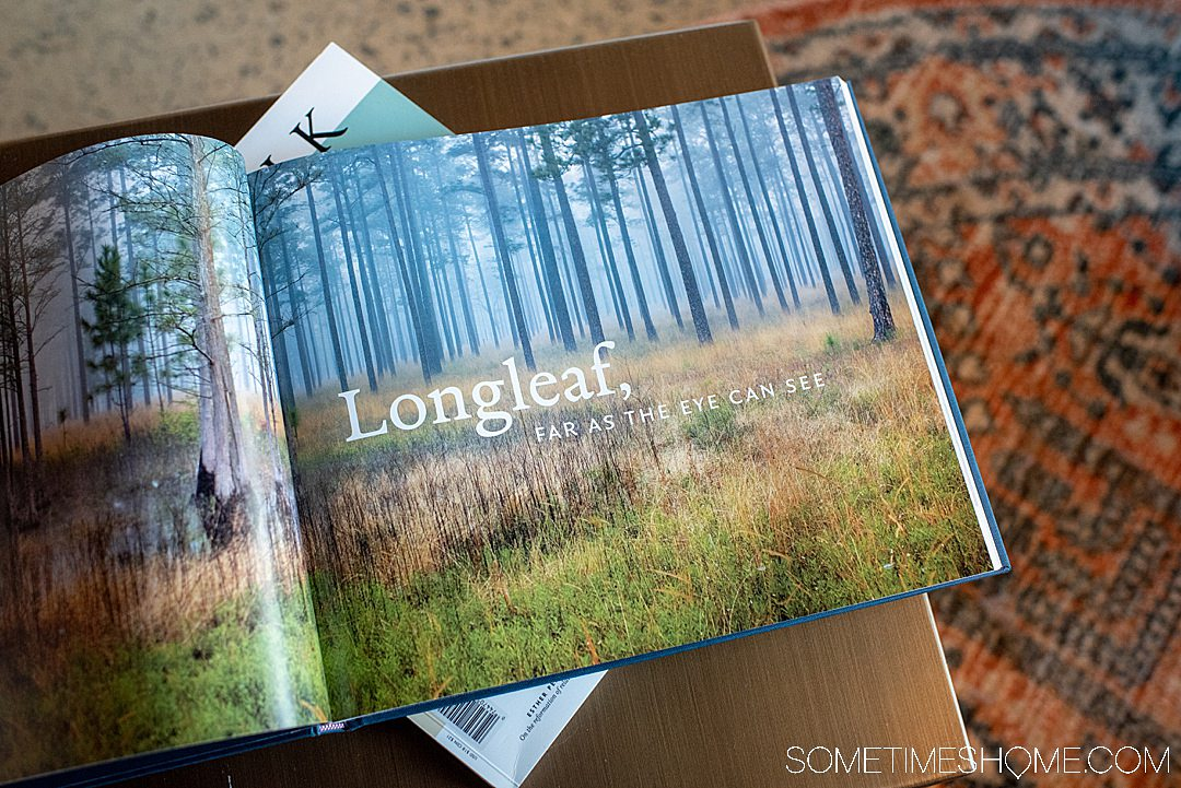 If you're moving to Raleigh and need a hotel while you house shop or visit the photography-worthy downtown area this is a great option. The Longleaf Hotel in Raleigh has great branding that was done by Joshua Gajownik in North Carolina. Located in the heart of downtown. #downtownRaleigh #NorthCarolina #sometimeshome