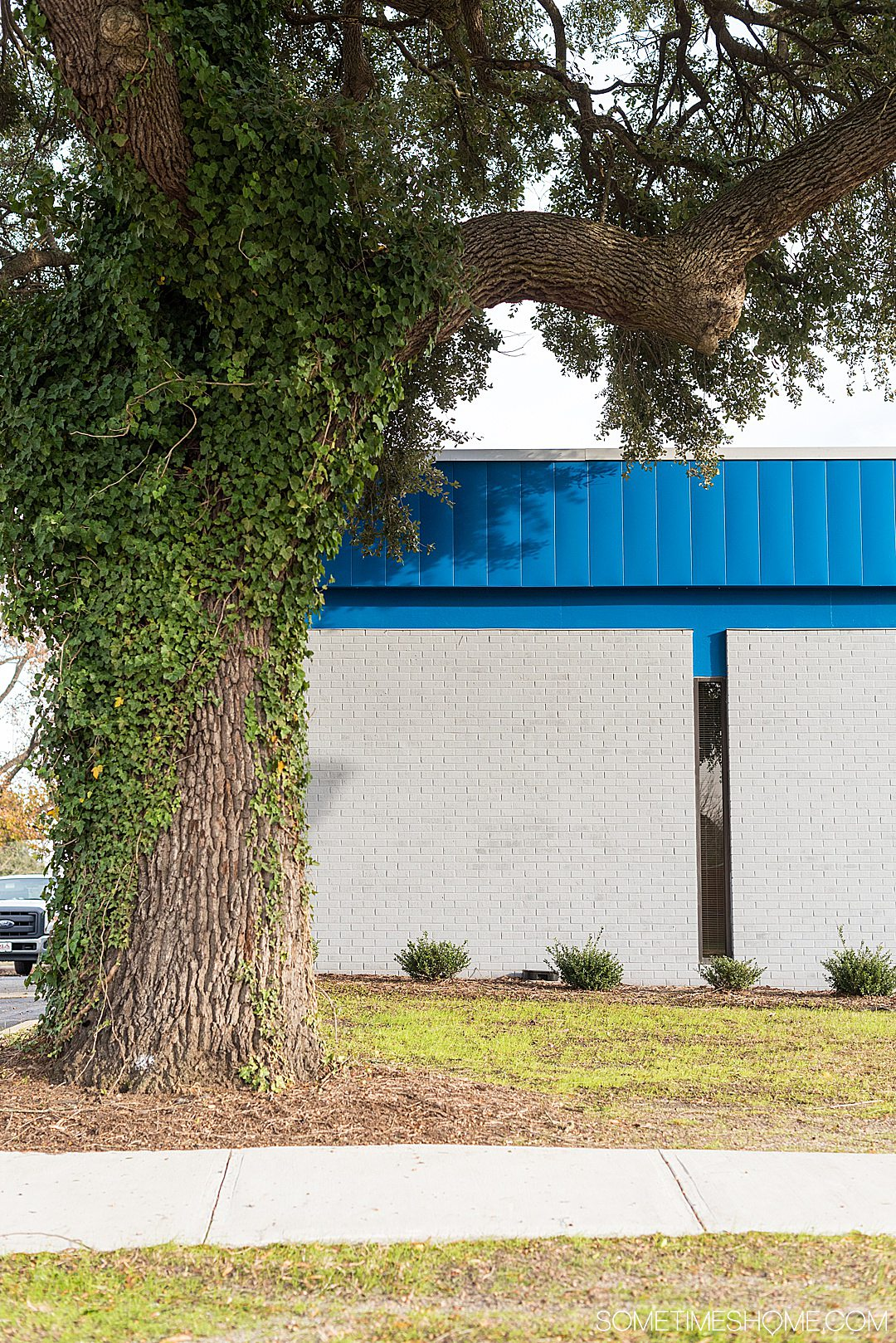Blue and white building with ivy on a tree in downtown Goldsboro, NC