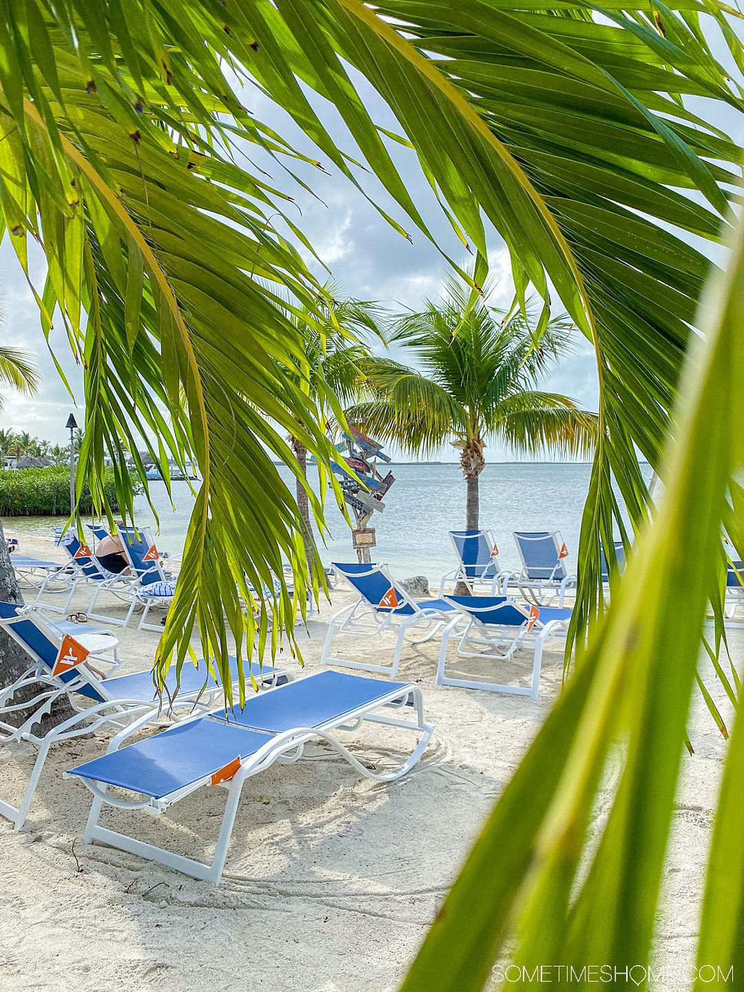 Blue lounge chairs on the beach as seen through green palm tree fronds.