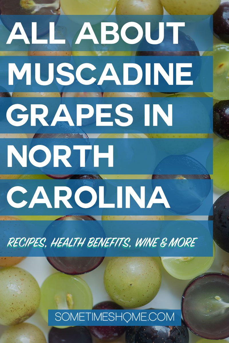 NC muscadine grapes Pinterest graphic
