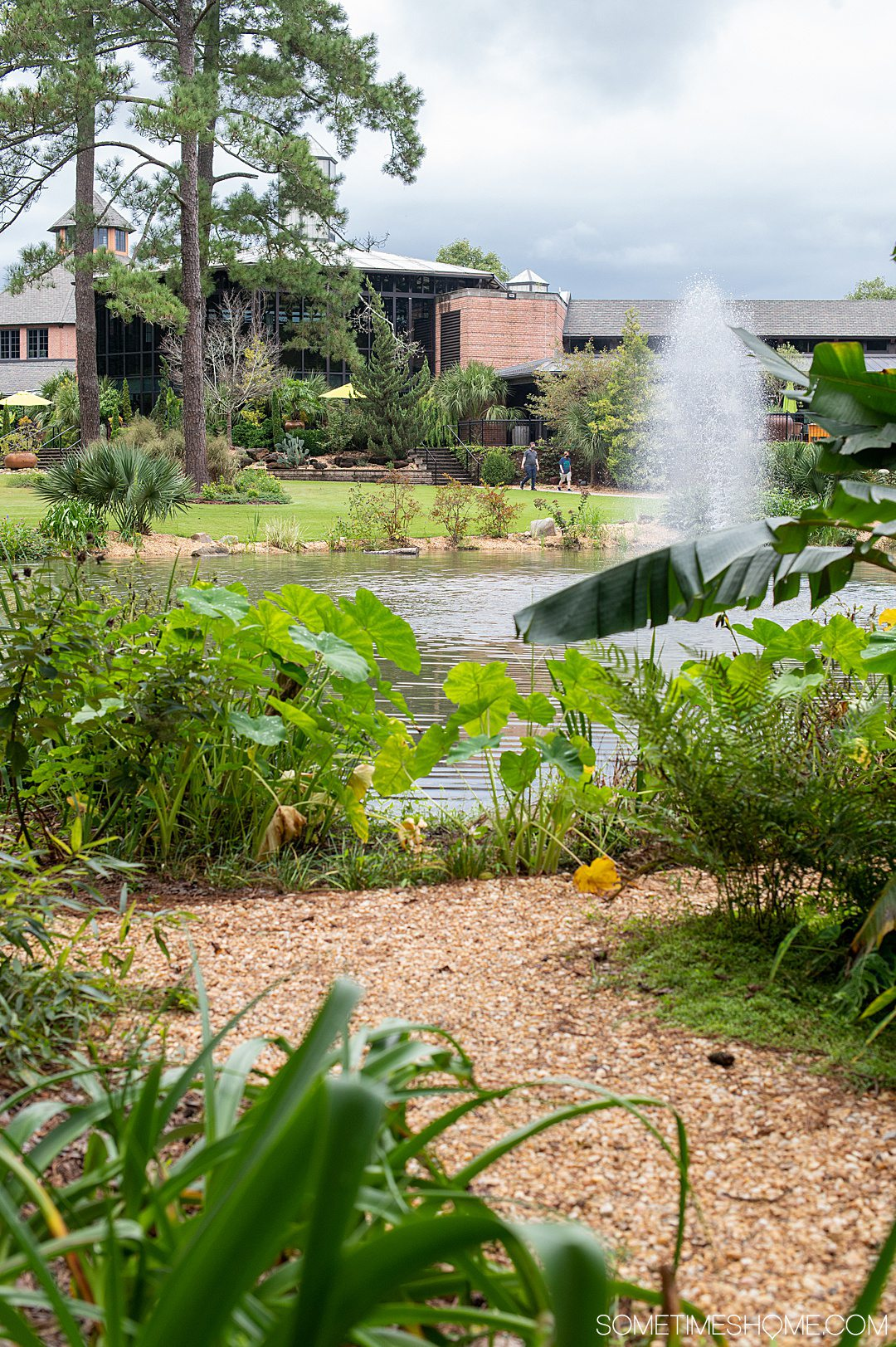 A view of tropical foliage and a lake with a water fountain in the middle at Cape Fear Botanical gardens.