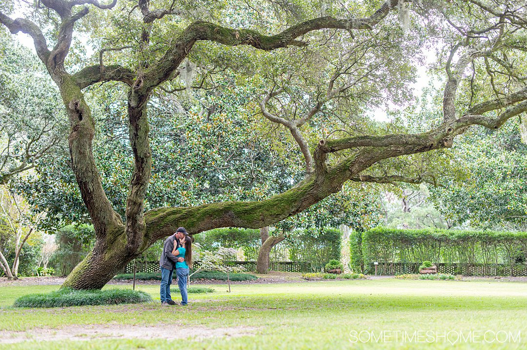 A couple under an old great Oak Tree on the great lawn of Elizabethan Gardens in the Outer Banks in October on Roanoke Island, founded by colonists in the 16th century. A couple is embracing under a branch that's covered in moss.