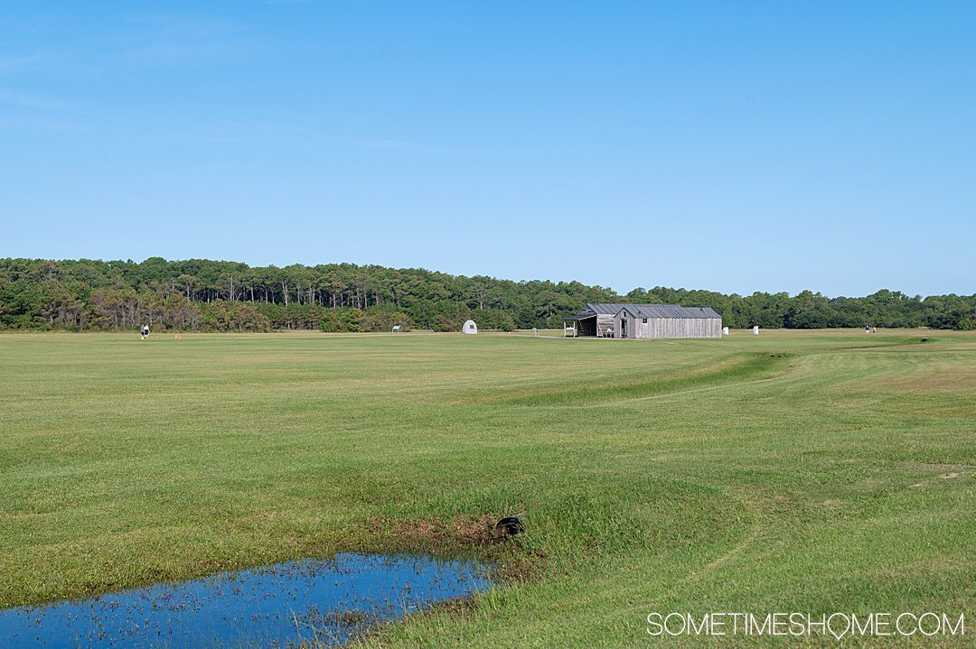 A green lawn with a little bit of water in the lower left hand corner, and blue skies. A wooden structure is in the distance.