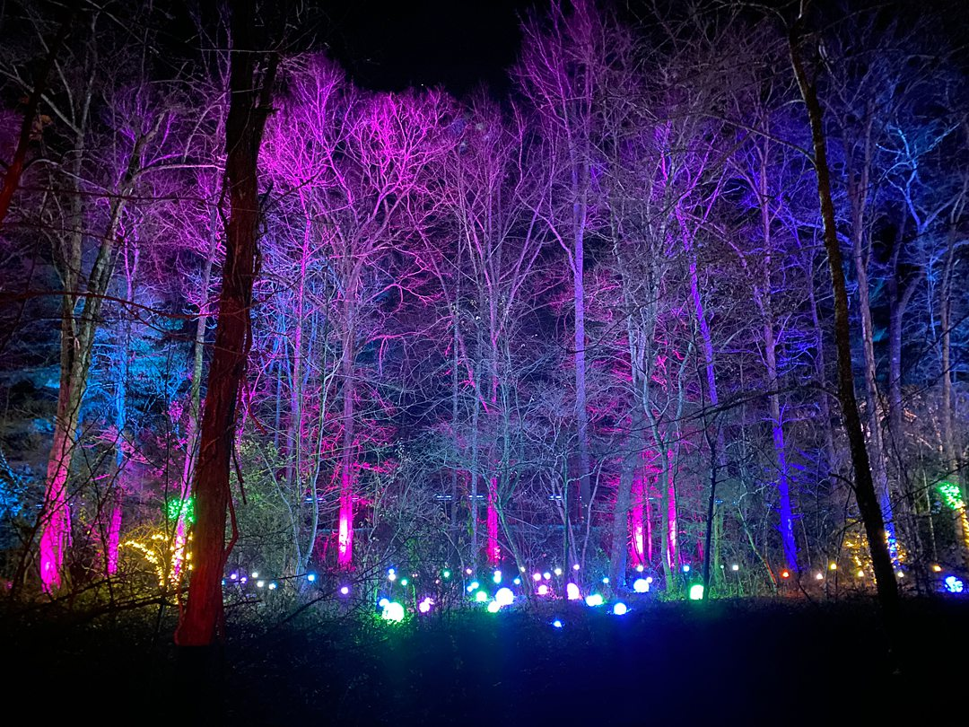Bare tree branches lit up by purple and blue lights at the NC Arboretum for one of the best winter events in North Carolina. Photo by Forest Orbs.