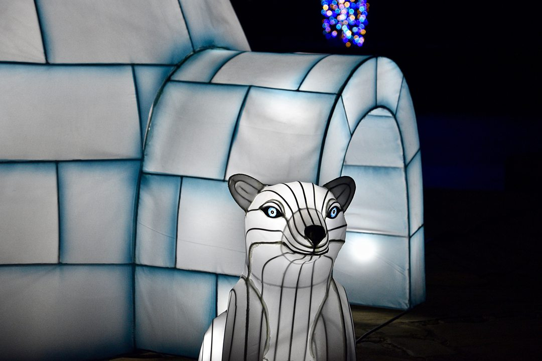 Holiday igloo and a polar bear at the NC Arboretum Winter Lights event in Asheville. Photo by Rebecca Ayres.