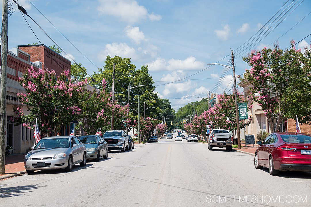 Main street in a small town with a blue sky and white clouds, and pink flowering trees lining the street.