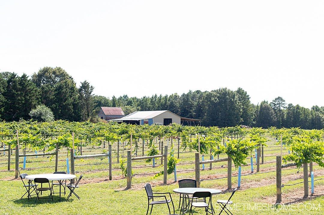Seven Springs vineyard and winery in Warrenton, NC.