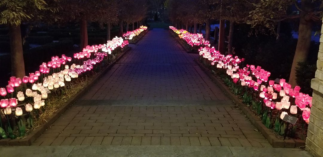 Image of lit up tulips lining a pathway for the holidays at Paul J. Ciener park near Winston-Salem.