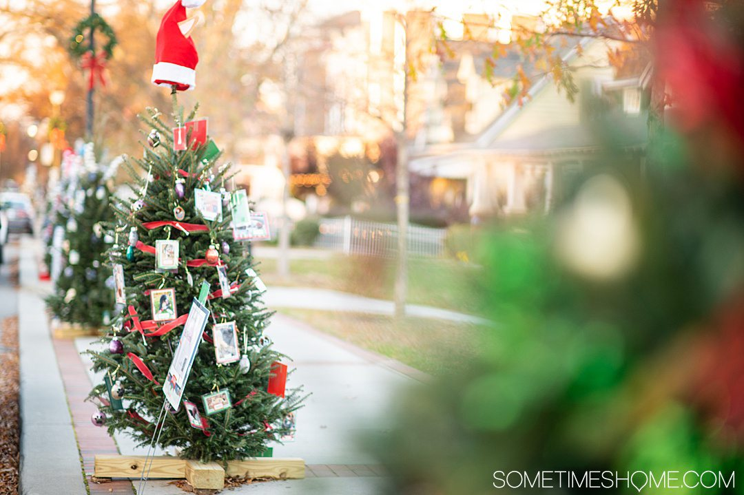 Christmas tree with a santa hat on it for winter events in North Carolina.