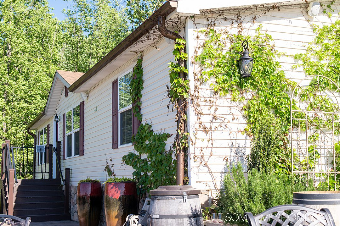 The side of a tan house with green vines growing up it, at Piccione Vineyards, one of the Yadkin Valley wineries in NC.