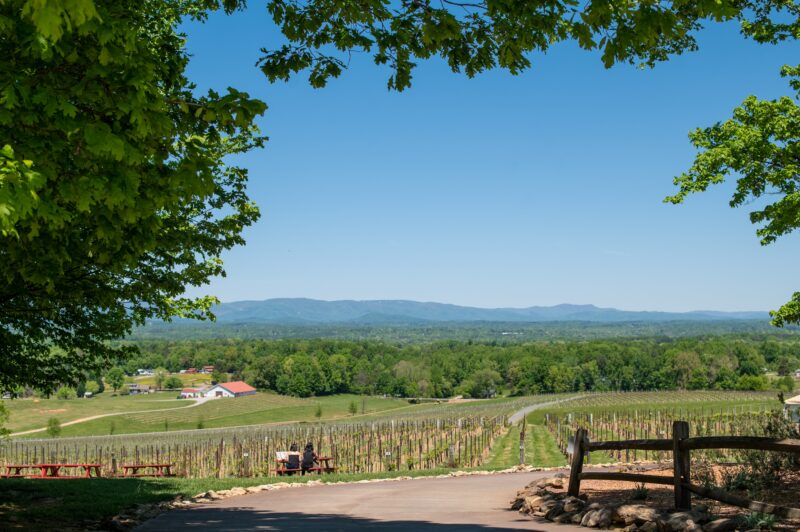 Yadkin Valley Wineries with Dry Wines in North Carolina's Wine Country