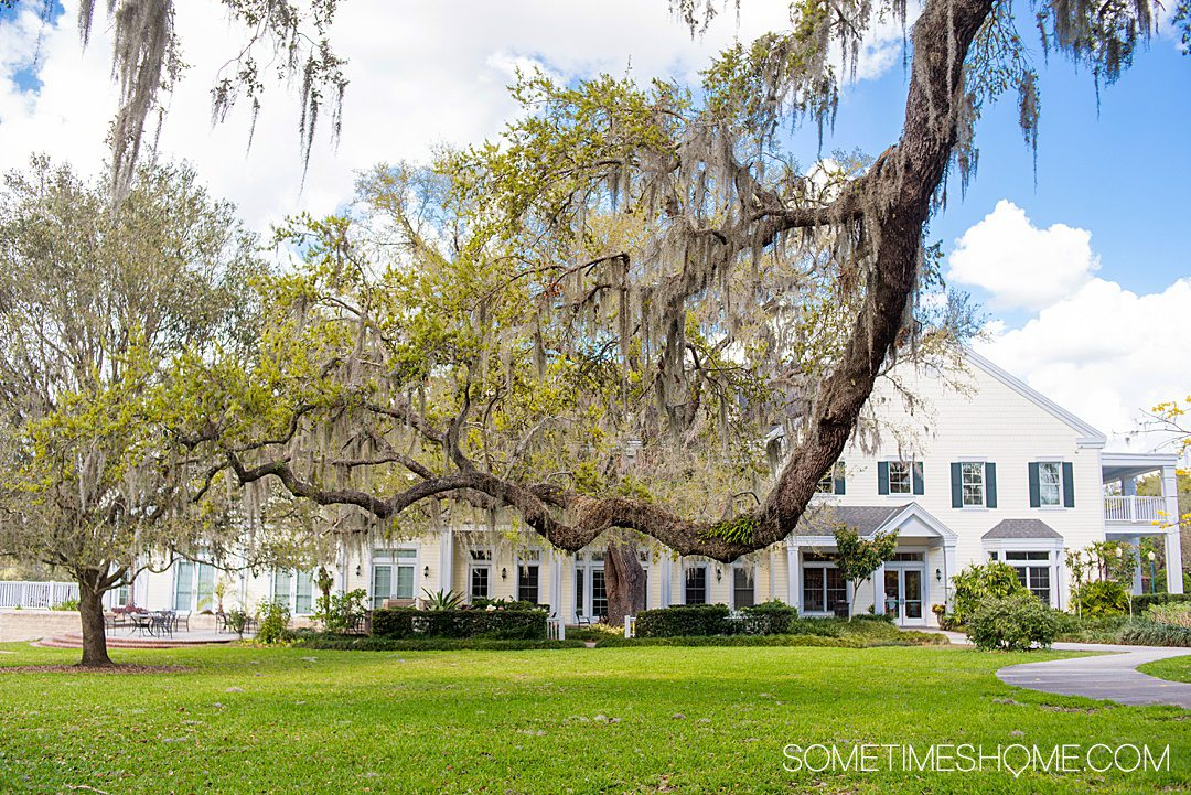 A tree branch in front of large estate house in the background at Leu Gardens in Orlando, FL.