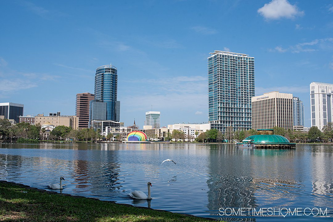 Downtown skyline in Orlando with Lake Eola with swans in the forefront. Visiting is one of the adult things to do in Orlando.