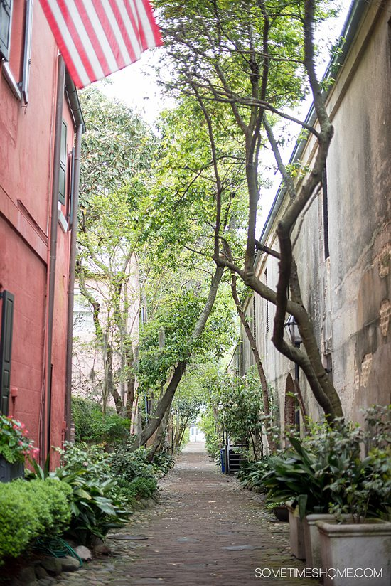 Philadelphia Alley and downtown Charleston, North Carolina, with trees and buildings on either side.