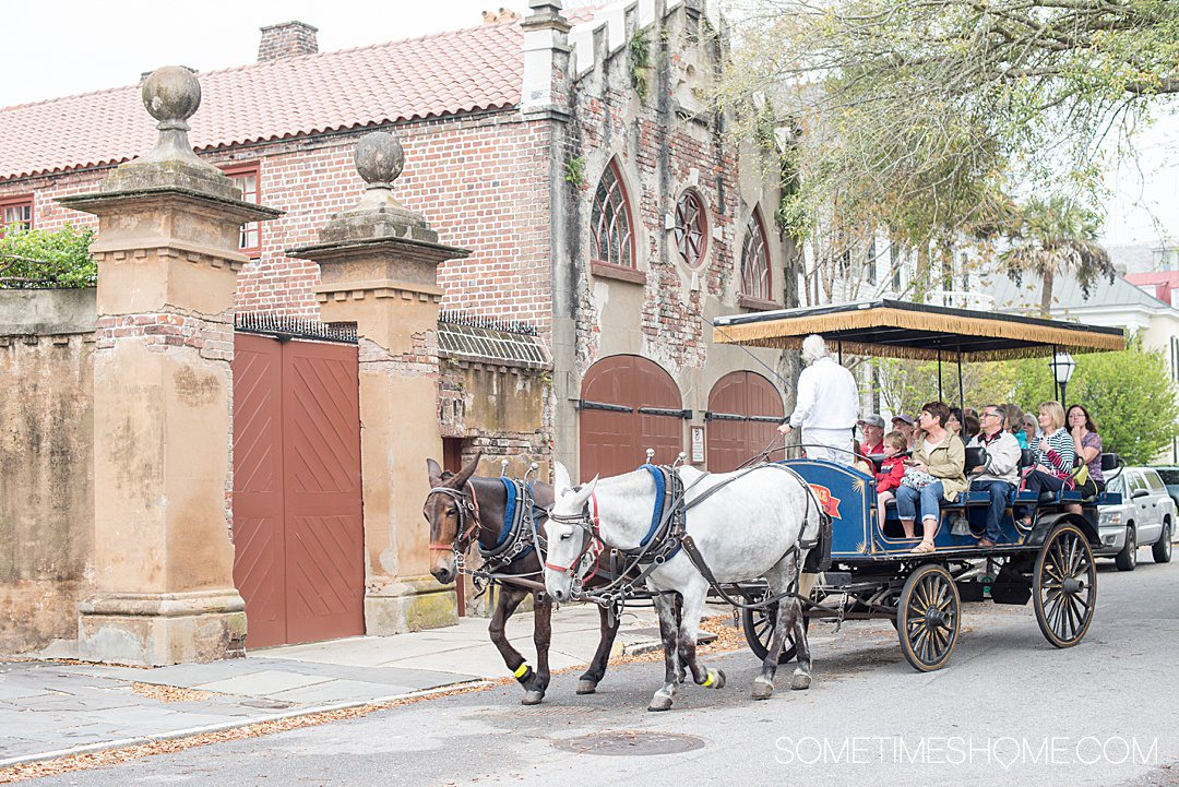 Carriage tour with a white and brown horse leading the carriage in historic Downtown Charleston.