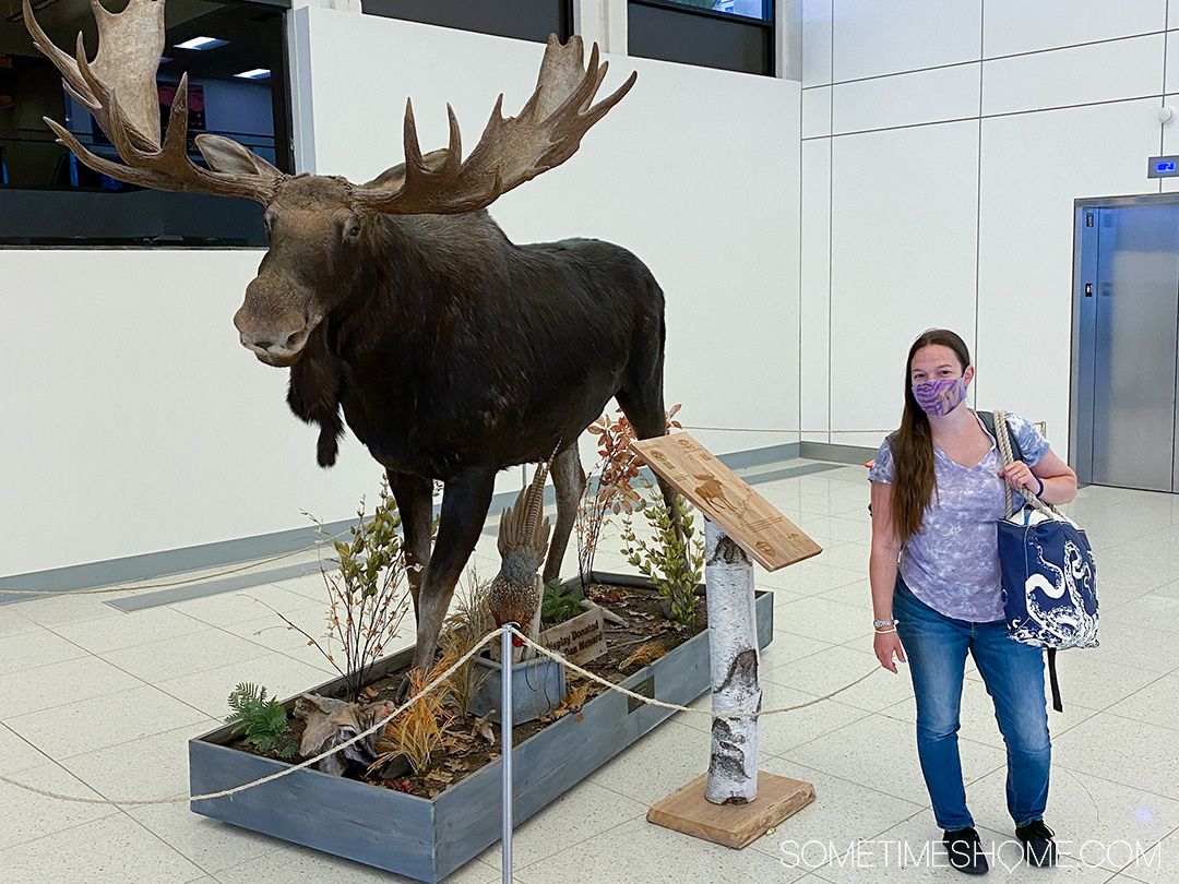Woman standing next to a moose in the Portland, Maine airport.