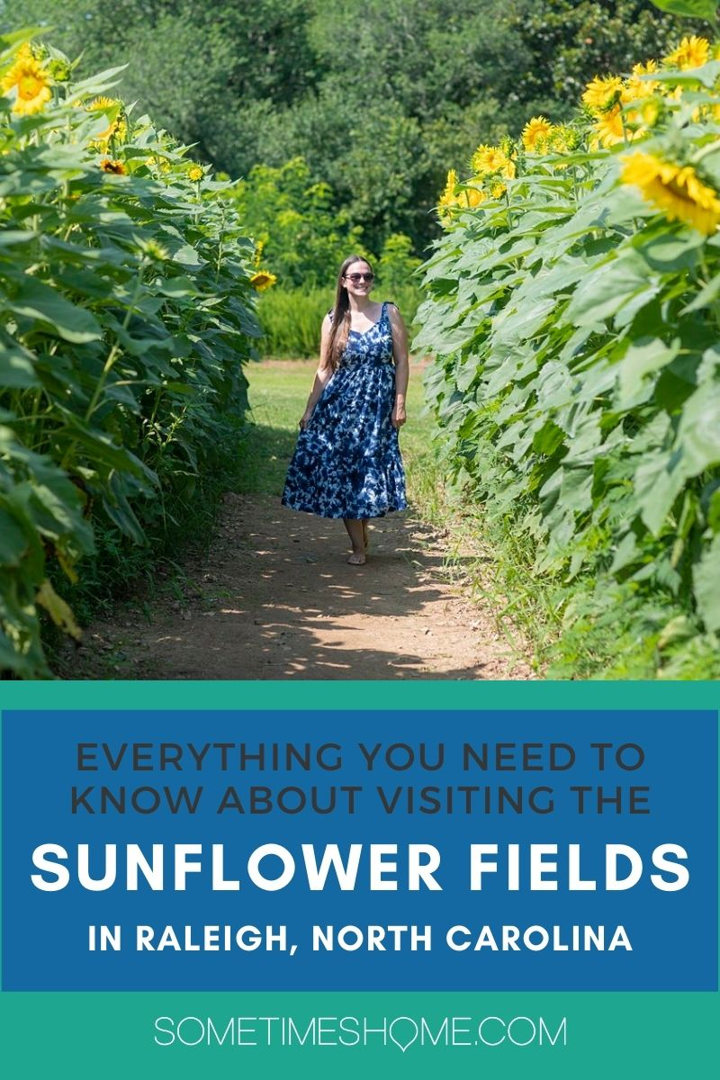 Everything you Need to know about the Raleigh Sunflower Fields with a picture of a woman walking within sunflowers.