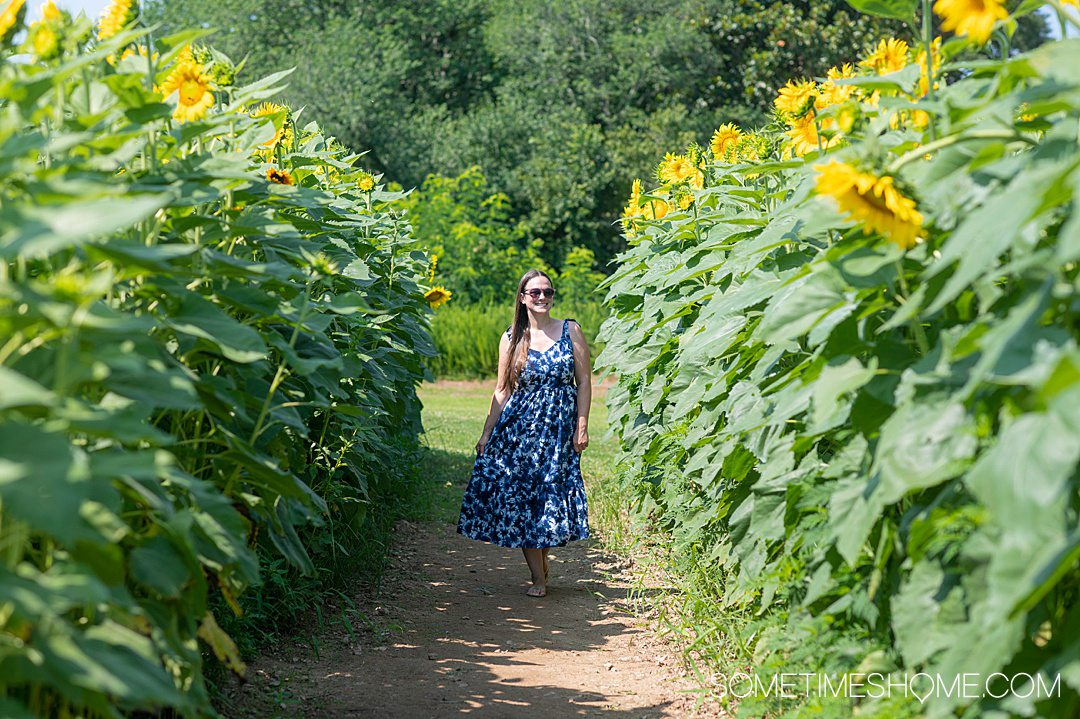 Sunflower field at Dorothea Dix park in Raleigh, NC with a girl in a blue dress in the middle of a walkway.